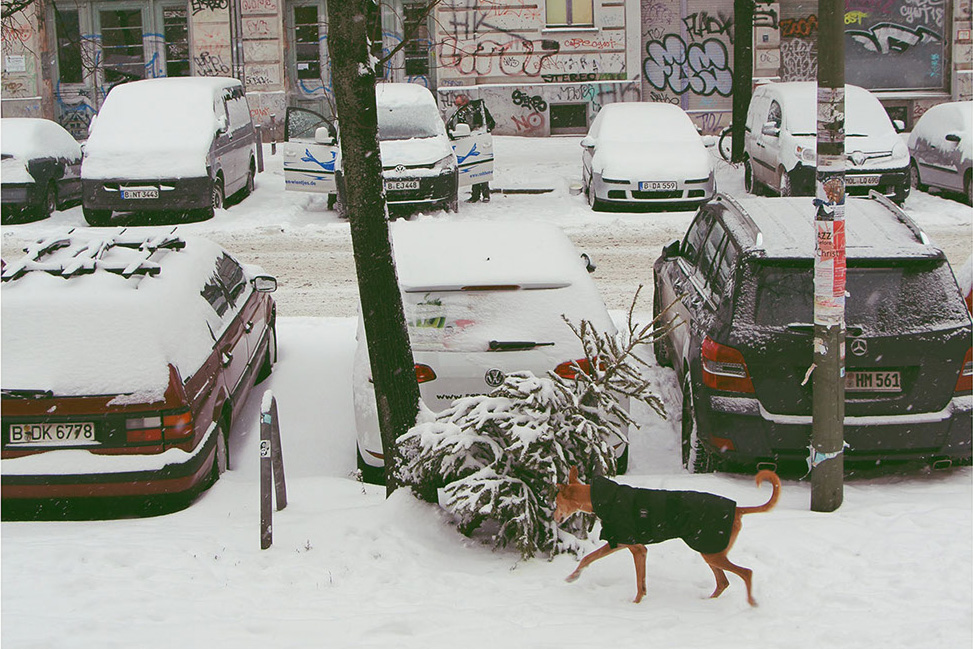 Berlin, the City of Homeless Christmas Trees