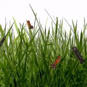 MEMBERS - Garden Closing w/ Tobi Neumann