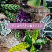 Plants&Friends: SALE of plants and pots!
