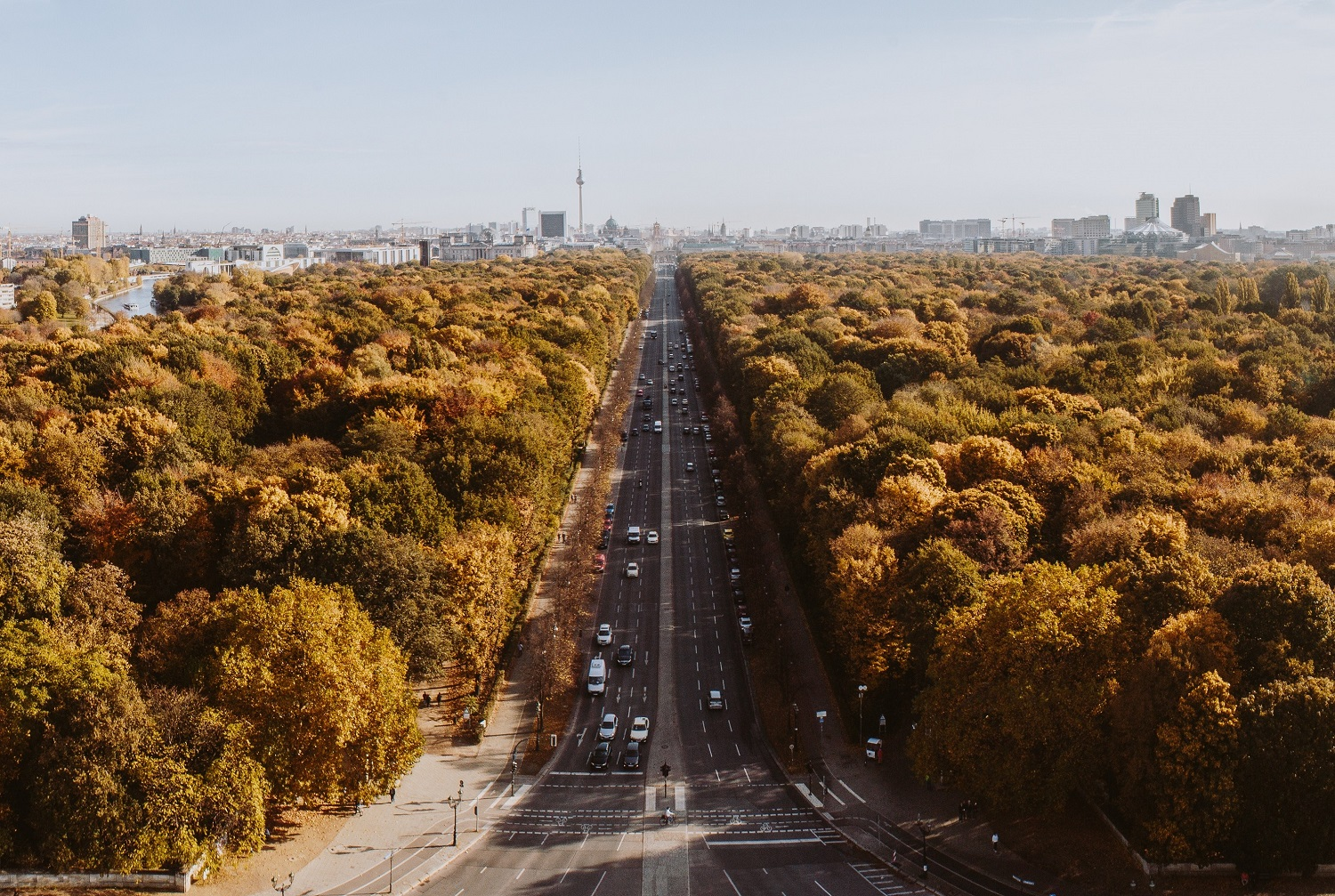 Berliners – We Have to Save our Trees From the Heat!