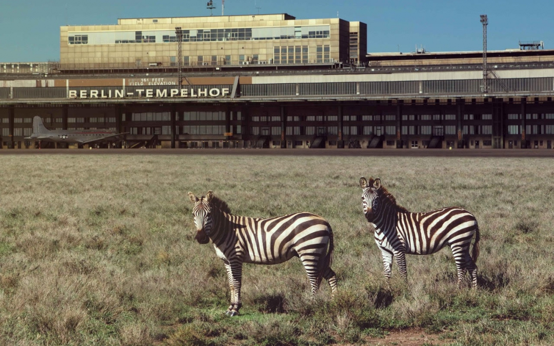 Fantastic Beasts of Berlin: A Safari Park at the Tempelhofer Feld
